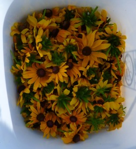 rudbeckia in bucket