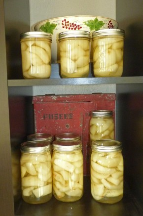 canned pears