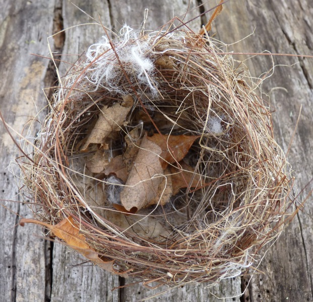 small nest 1