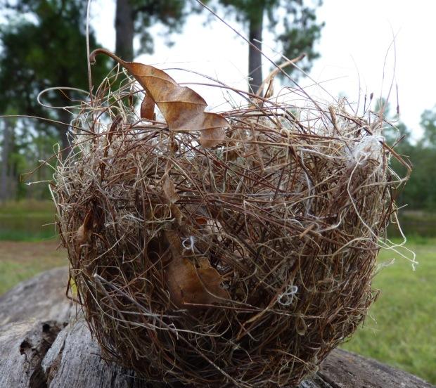 small nest 2