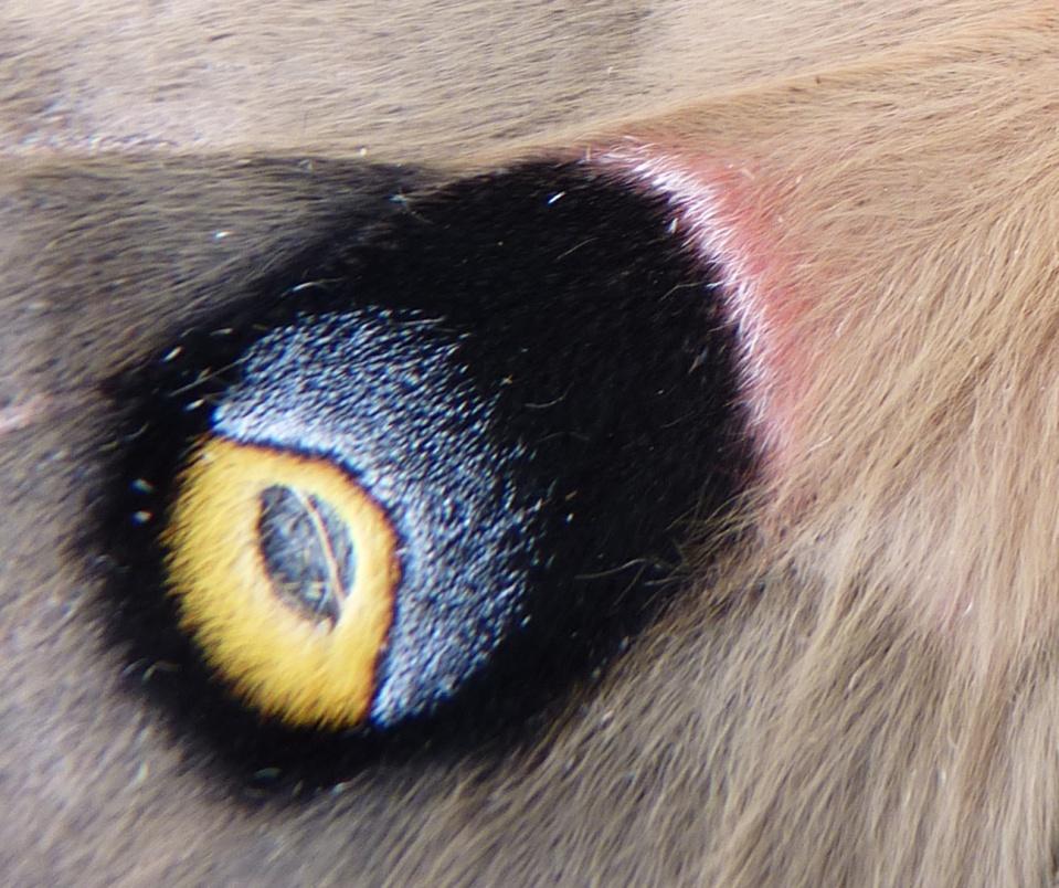 close-up of eyespot