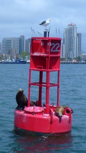 sea lions and gull