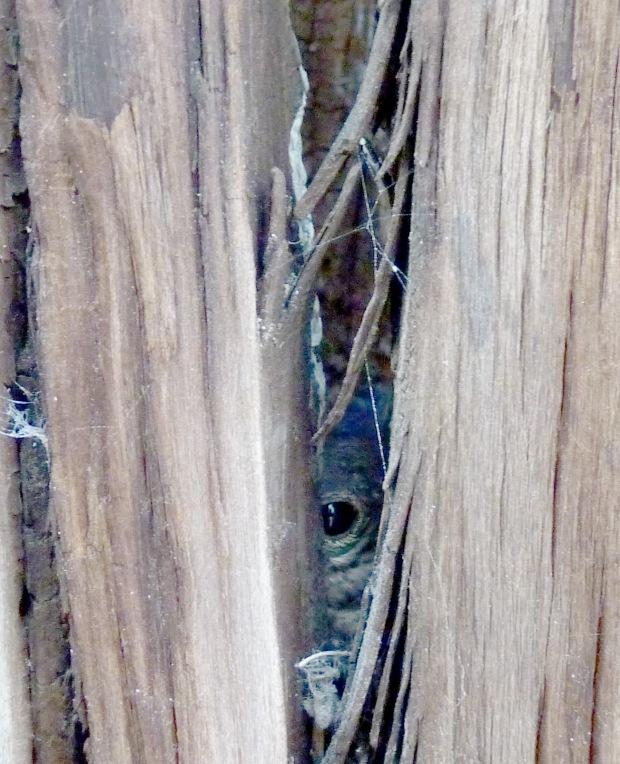 hidden baby bluebird