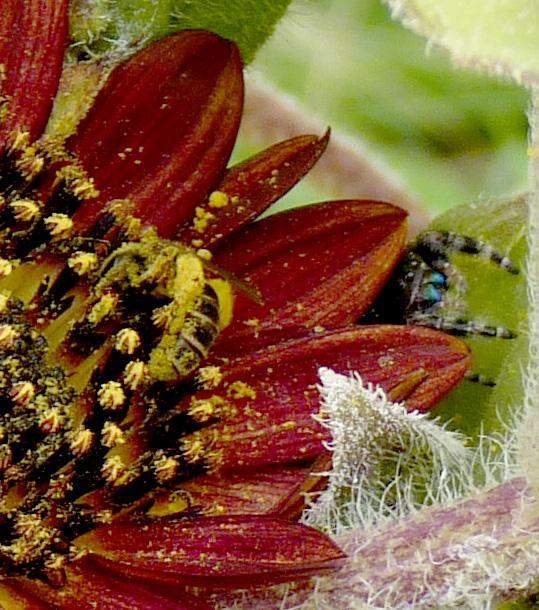 bee & spider