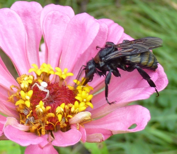 bee and spider