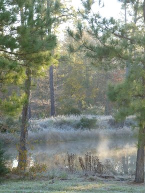frost around pond