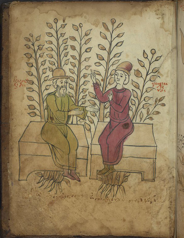 page from herbal