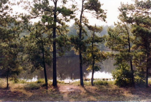 The pond in 1981.
