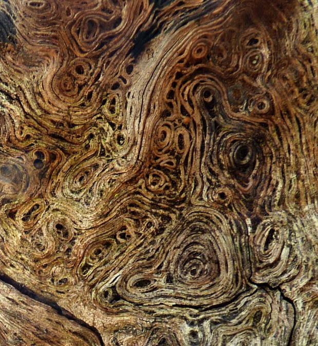 East Texas Textures