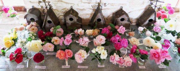 A Visit to the Antique RoseEmporium