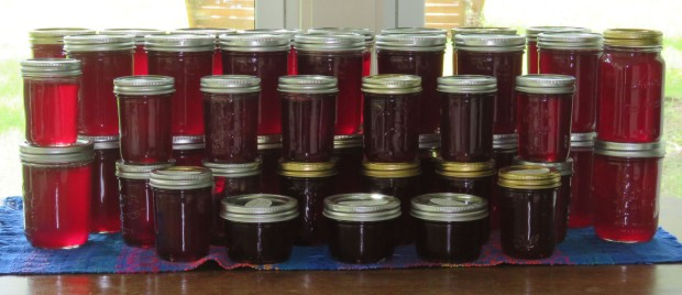 43 pints of mustang grape jelly.
