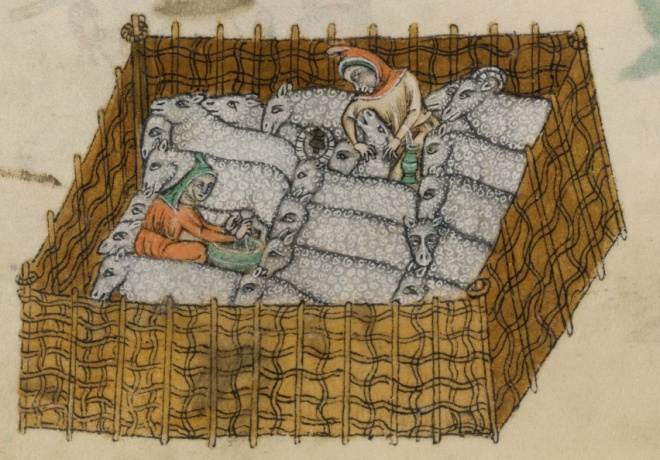 Detail of page above, showing 20 sheep being milked and shorn; 2 have horns.