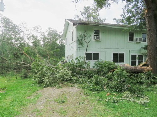 The fallen tree extends past the house.